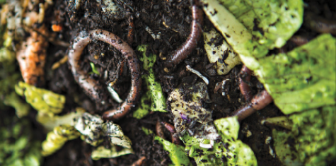 Worm farm to turn school waste into compost